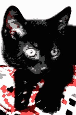 1old cat