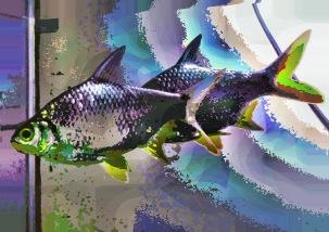 fish04