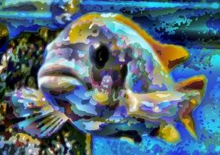 fish05