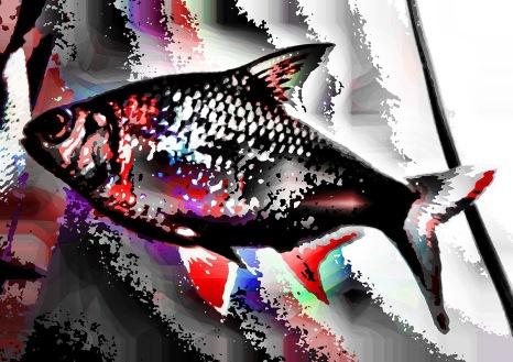 fish07