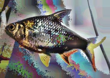 fish09