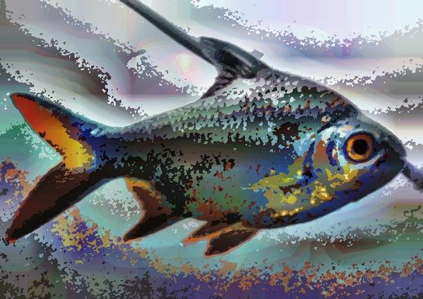fish12