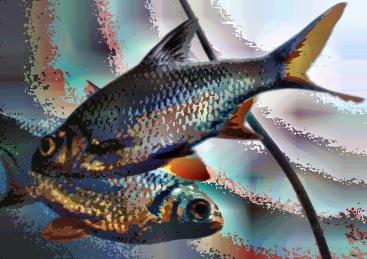 fish16