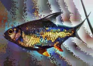 fish18