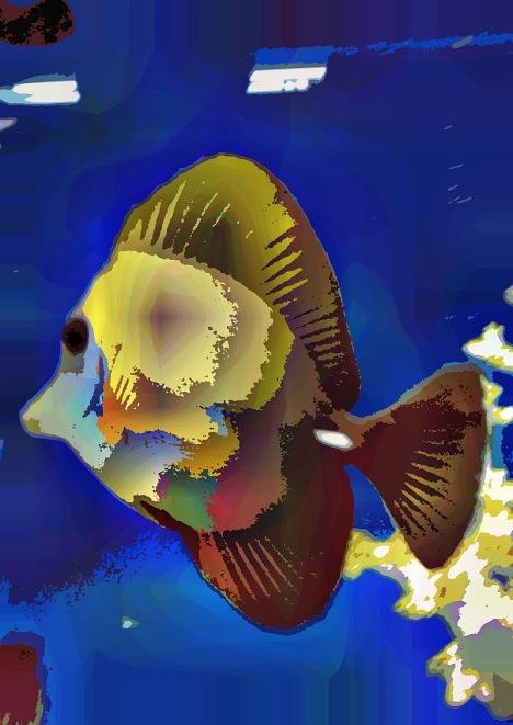 fish19