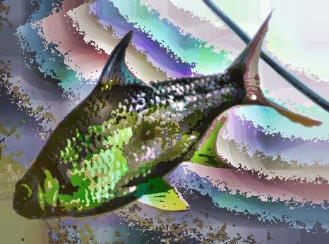 fish20