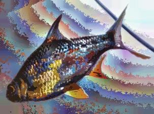 fish21