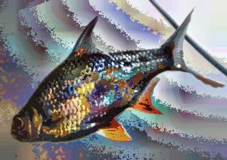 fish24
