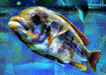 fish25