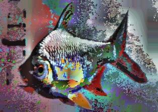 fish26