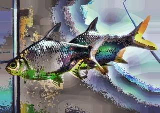 fish29