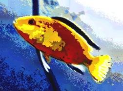 fish30