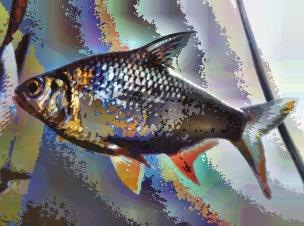 fish31