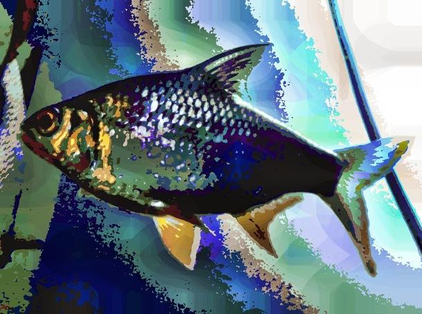 fish32