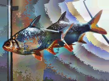 fish34