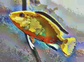 fish36