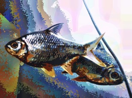 fish37