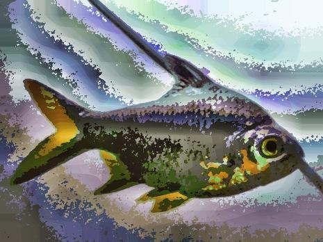 fish38