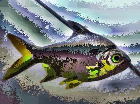royal fish