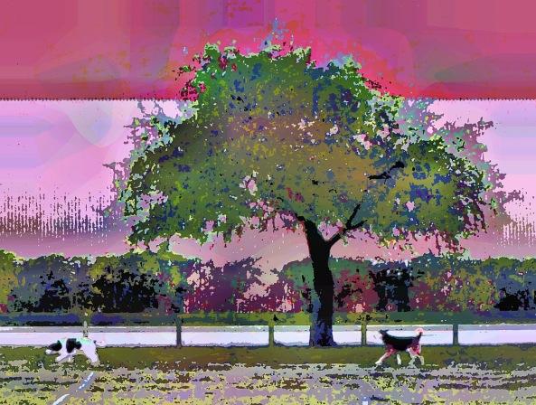 dog-walk1