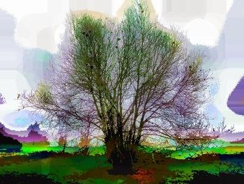 rainbow-tree2