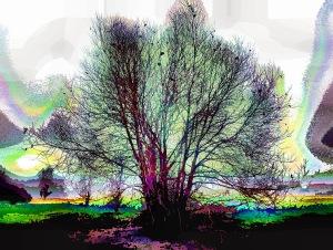 rainbow-tree3