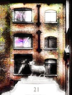 urban-sheep