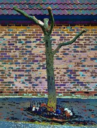 suburban-tree1