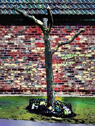suburban-tree2