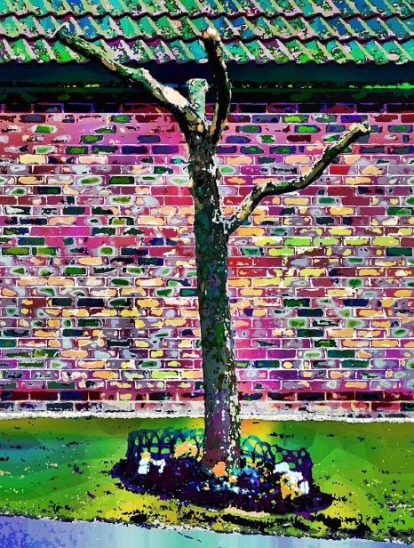 suburban-tree3