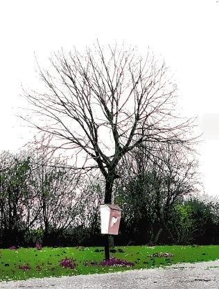 tree-fashion3