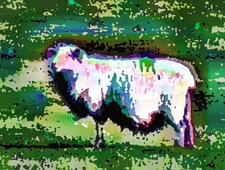 farmyard-animal