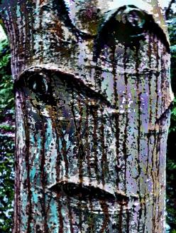 fictional tree