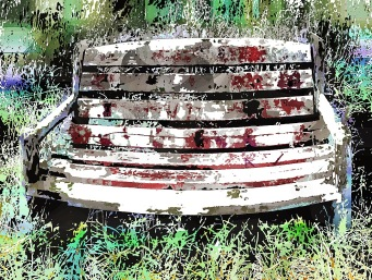 wild bench