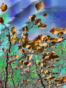 broken-branches