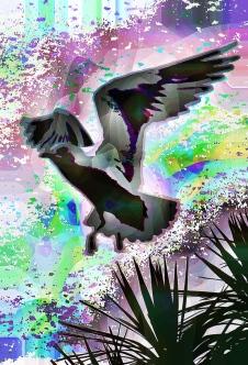landingbird