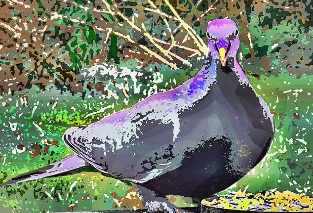 neighbourhood-bird