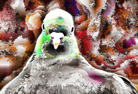 not-parrot (4)