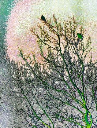 green-tree