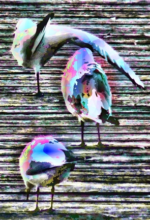 musical-birds