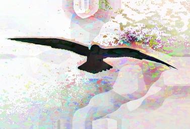stealthbird