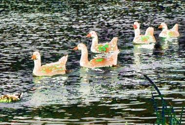 water-birds