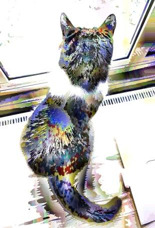 cat-sat