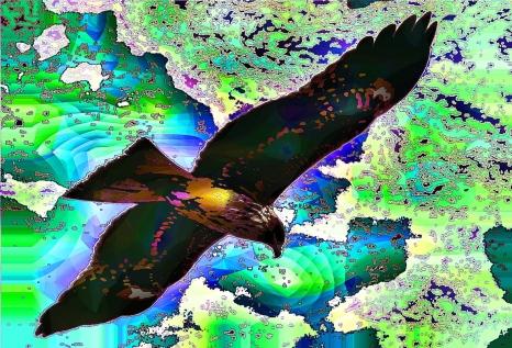 kittyhawk (6)