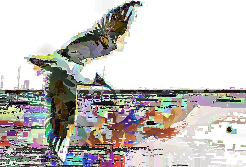 birdie (5)